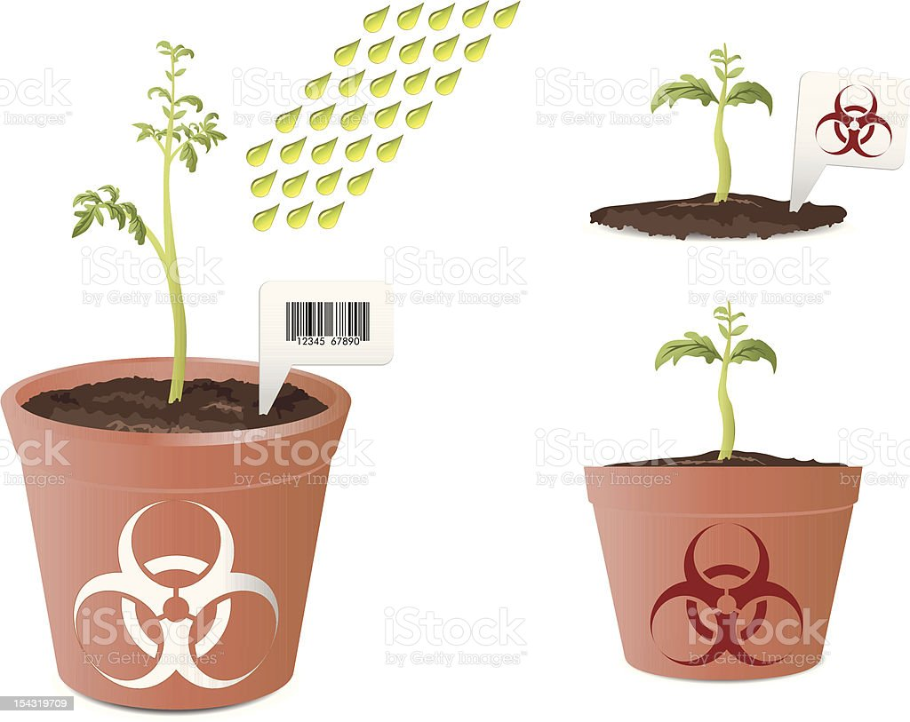 Tomato plant with bio hazard mark royalty-free stock vector art