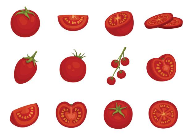 Tomato, red vegetable set in different slices Tomato, red vegetable set in different slices. Glossy red, tasty natural salad ingredient for cooking. Vector flat style cartoon illustration isolated on white background tomato stock illustrations