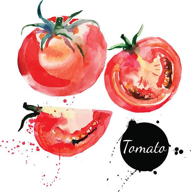 ilustrações de stock, clip art, desenhos animados e ícones de conjunto de tomate. mão desenhada pintura em aquarela sobre fundo branco. - tomate