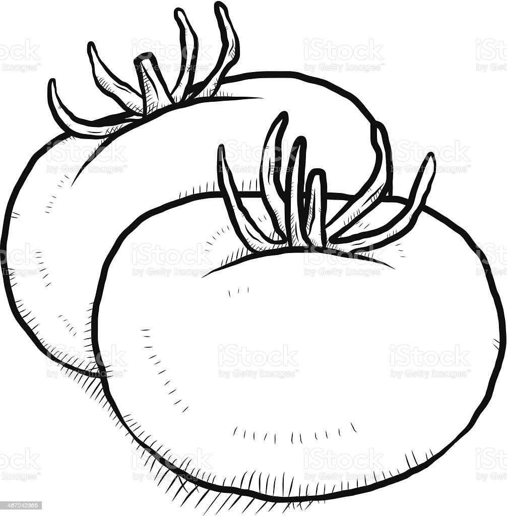 Tomato Sketch Stock Vector Art U0026 More Images Of Agriculture 467242365 | IStock