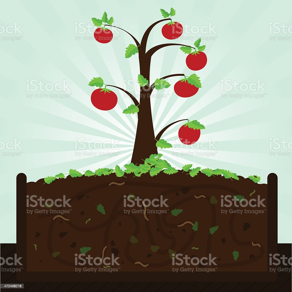 Tomato tree and compost vector art illustration