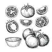 Tomato vector drawing set. Isolated tomato, sliced piece and tom