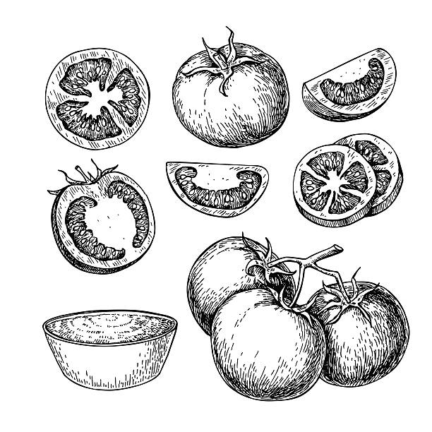 Tomato vector drawing set. Isolated tomato, sliced piece and tom Tomato vector drawing set. Isolated tomato, sliced piece and tomato sauce. Vegetable engraved style illustration. Detailed vegetarian food sketch. Farm market product. tomato stock illustrations