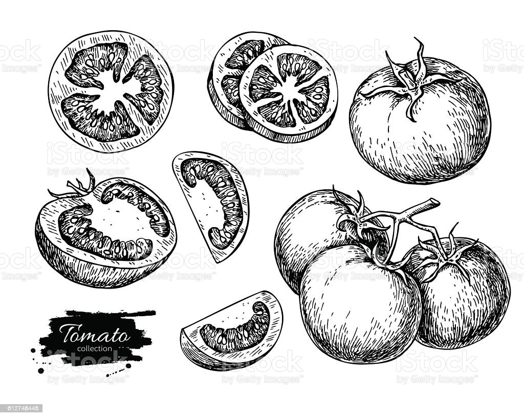 Tomato vector drawing set. Isolated tomato, sliced piece vegetab vector art illustration