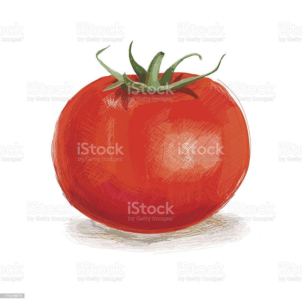 Tomato vector art illustration