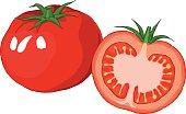 Vector illustration of fresh tomato.
