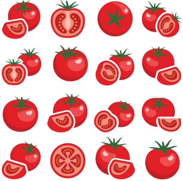Tomato Tomato collection - vector color illustration tomato stock illustrations