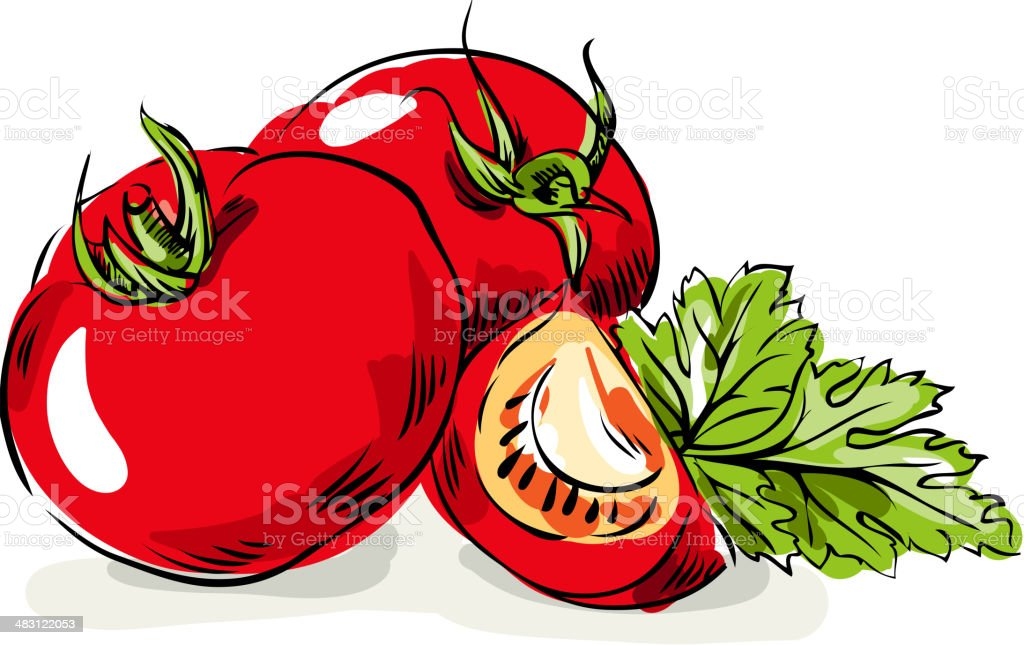 Tomato vegetables and parsley vector art illustration