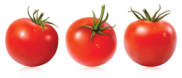 Tomato with water drops.  tomato stock illustrations
