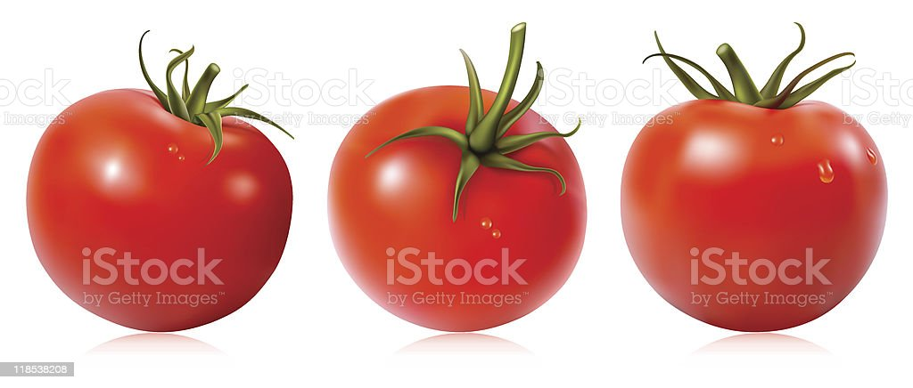 Tomato with water drops. vector art illustration