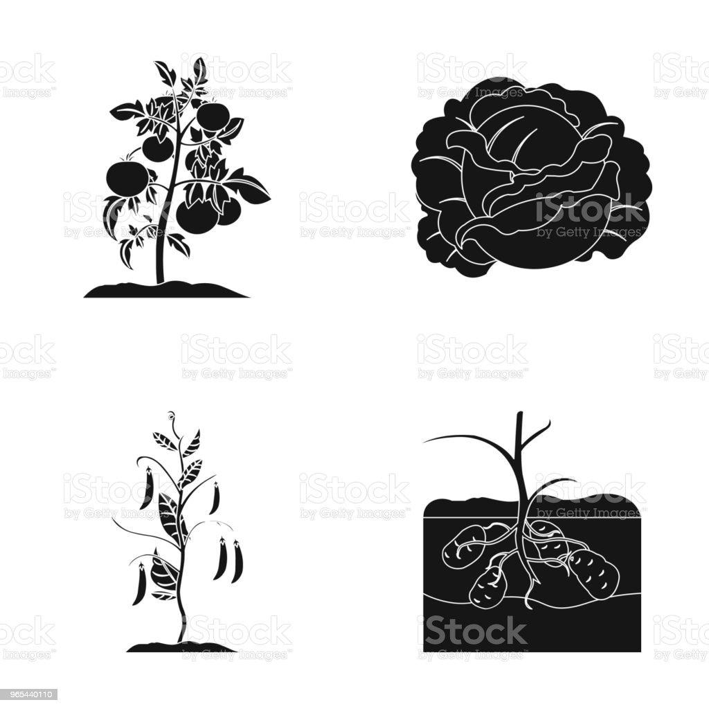 토마토, 양배추와 다른 야채입니다. 식물 블랙 스타일 벡터 기호 재고 일러스트 레이 션 웹에서 컬렉션 아이콘을 설정합니다. - 로열티 프리 0명 벡터 아트