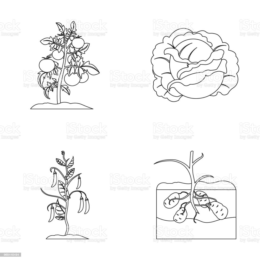 Tomatoes, cabbage and other vegetables.Plant set collection icons in outline style vector symbol stock illustration web. royalty-free tomatoes cabbage and other vegetablesplant set collection icons in outline style vector symbol stock illustration web stock vector art & more images of cabbage