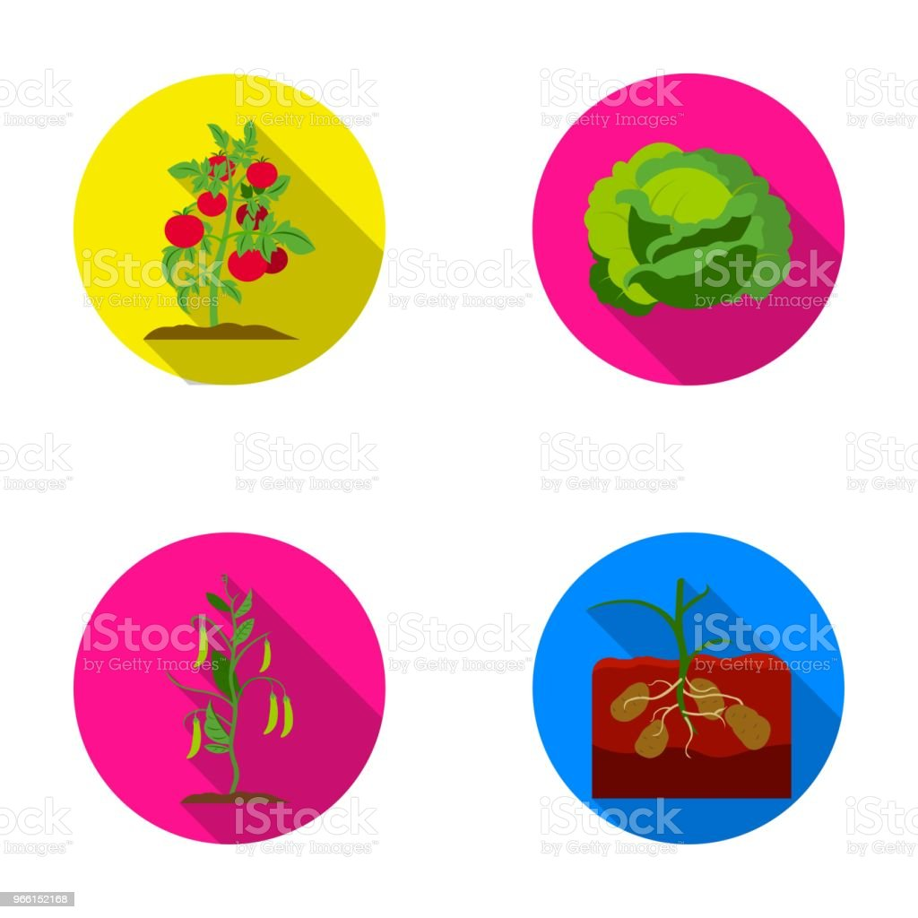 Tomatoes, cabbage and other vegetables.Plant set collection icons in flat style vector symbol stock illustration web. - Royalty-free Cabbage stock vector