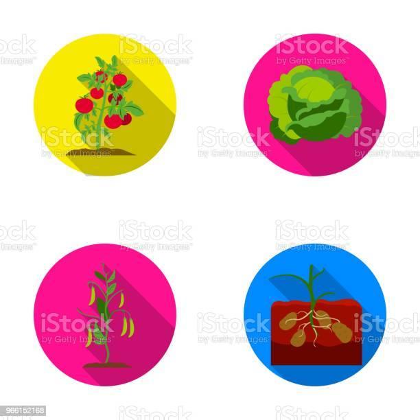 Pomodori Cavoli E Altre Verdure Icone Di Raccolta Set Di Piante In Stile Piatto Simbolo Vettoriale Illustrazione Stock Web - Immagini vettoriali stock e altre immagini di Cavolo