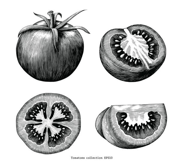 ilustrações de stock, clip art, desenhos animados e ícones de tomatoes hand draw vintage clip art isolated on white background - tomate