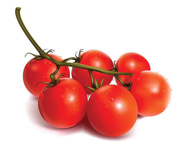 tomatoes on the vine on a white background - cherry tomato stock illustrations