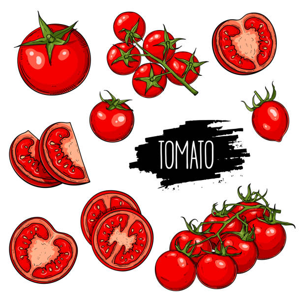 tomatoes set collection - cherry tomato stock illustrations