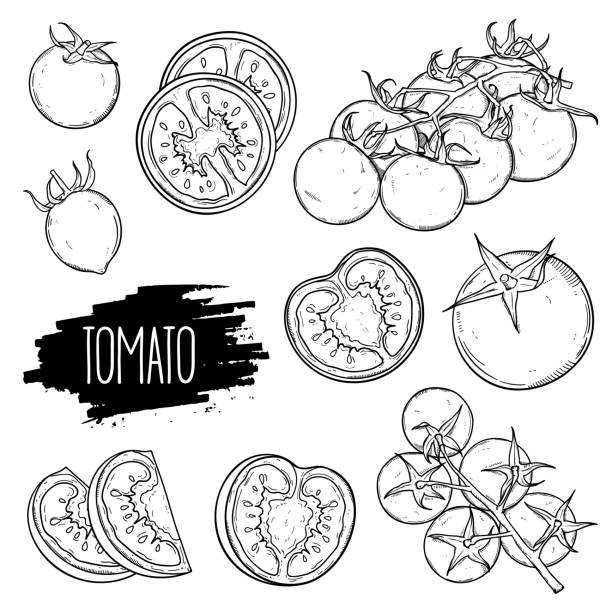 Tomatoes set collection Hand drawn tomato set. Tomatoes, slices, halves, cherry tomatoes and bunch isolated on white background. Outline ink slyle sketch. Vector coloring illustration. tomato stock illustrations