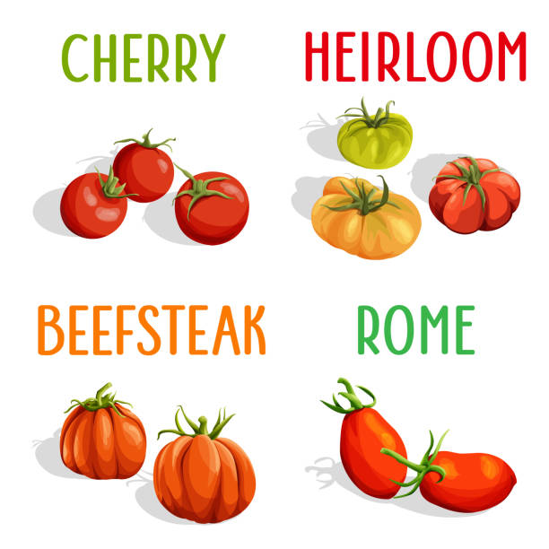 tomatoes - cherry tomato stock illustrations