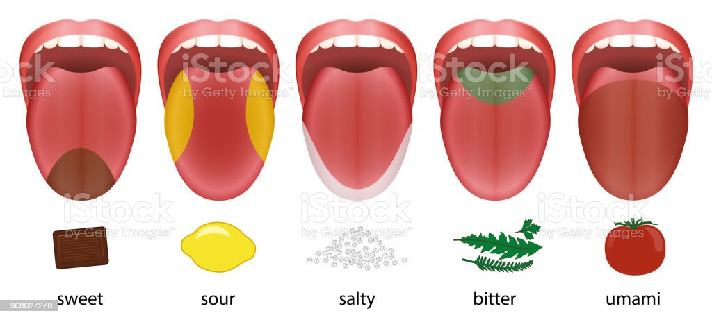 Tongue with five taste areas sweet, sour, salty, bitter and umami represented by chocolate, lemon, salt, herbs and tomatoe. vector art illustration