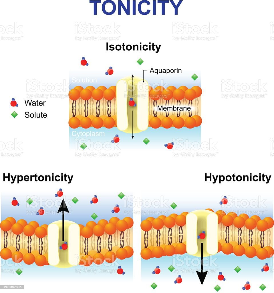Tonicity and osmosis. Cell membrane and aquaporin. vector art illustration