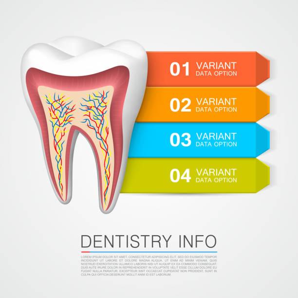 牙齒與編號的資訊。牙科學資訊。 - bar 幅插畫檔、美工圖案、卡通及圖標