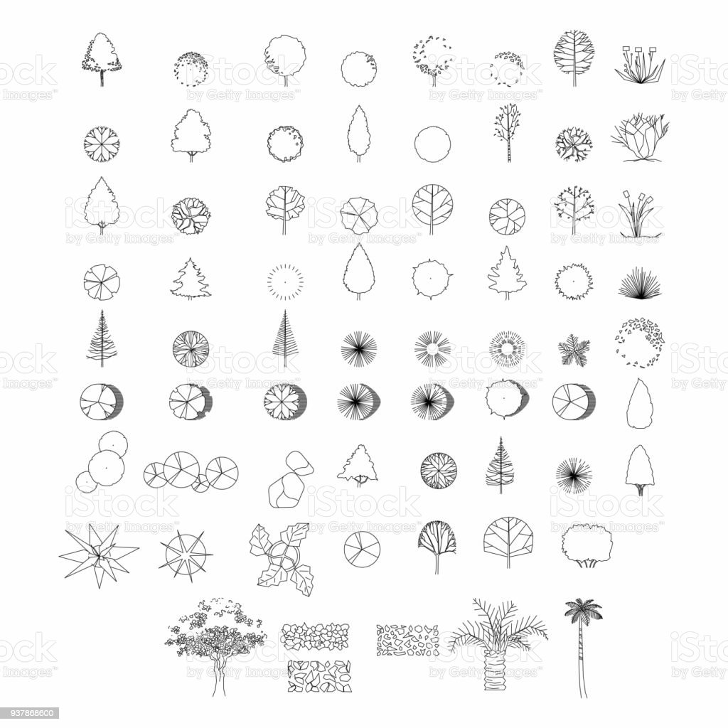 Top view and side view, set of graphics trees elements outline symbol for architecture and landscape design drawing. Vector illustration vector art illustration