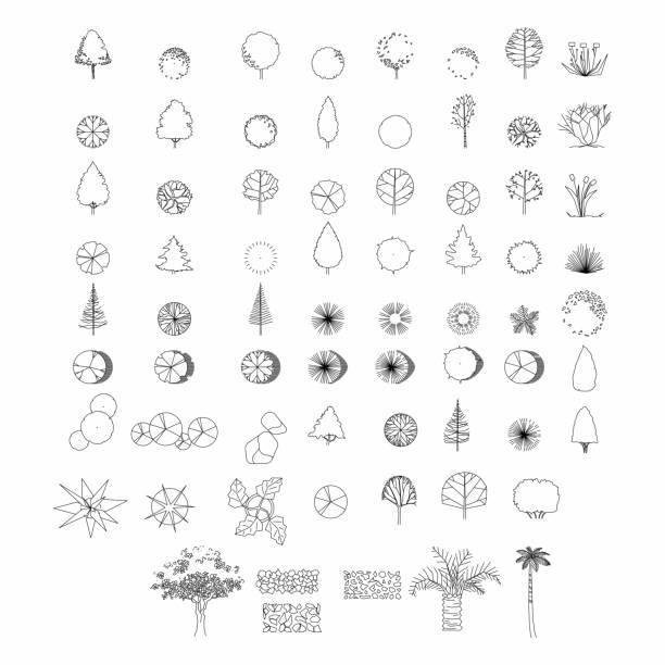 top view and side view, set of graphics trees elements outline symbol for architecture and landscape design drawing. vector illustration - architecture symbols stock illustrations