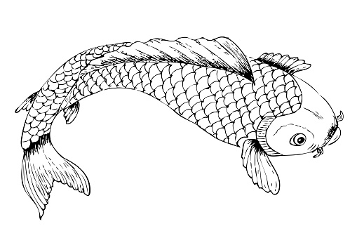 Top View Or Flat Lay Hand Draw Sketch Koi Fish Stock