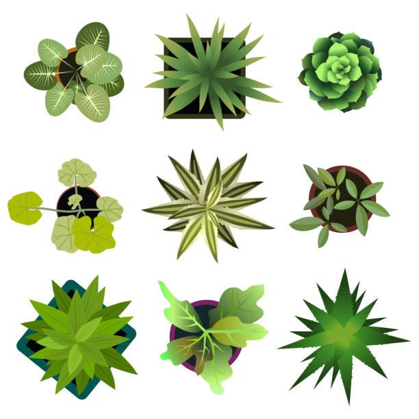 ilustrações de stock, clip art, desenhos animados e ícones de top view. plants easy copy paste in your landscape design - plantar