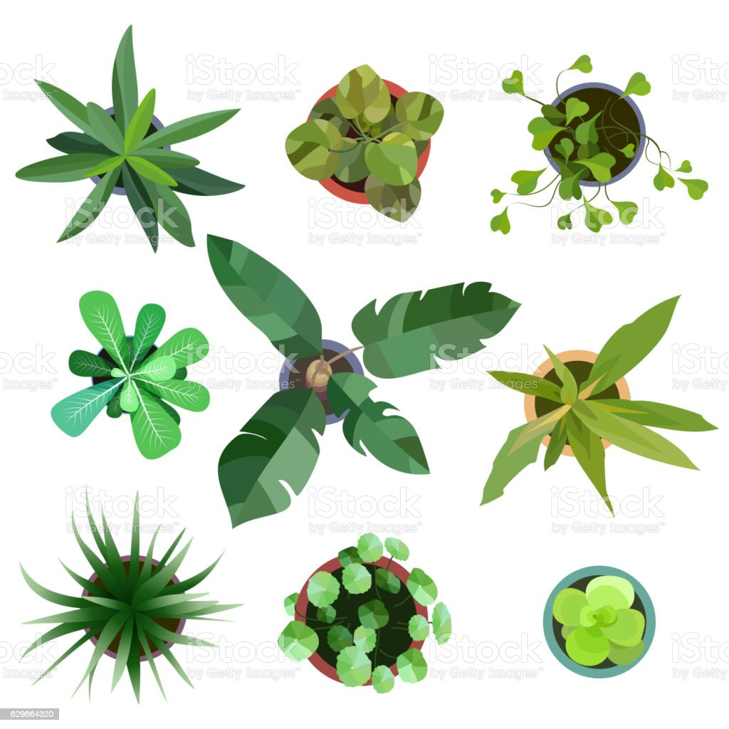 Top view. plants Easy copy paste in your landscape design vector art illustration