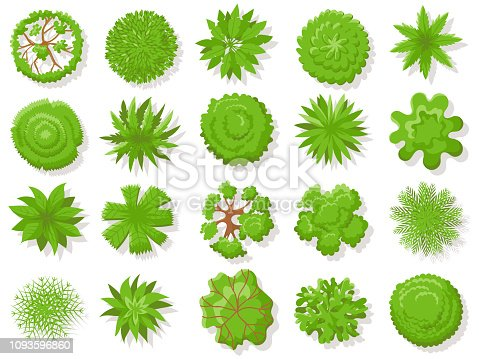 Top view plants. Tropical trees, green plant tree from above for aerial map. Garden landscape plan, planting tops or forest tree top isolated vector icons collection