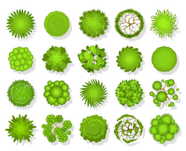 トップ ビュー ツリー。空中風景緑の植栽、公園マップ植生と上のベクトルセットから熱帯林計画要素 - 森林 俯瞰点のイラスト素材/クリップアート素材/マンガ素材/アイコン素材