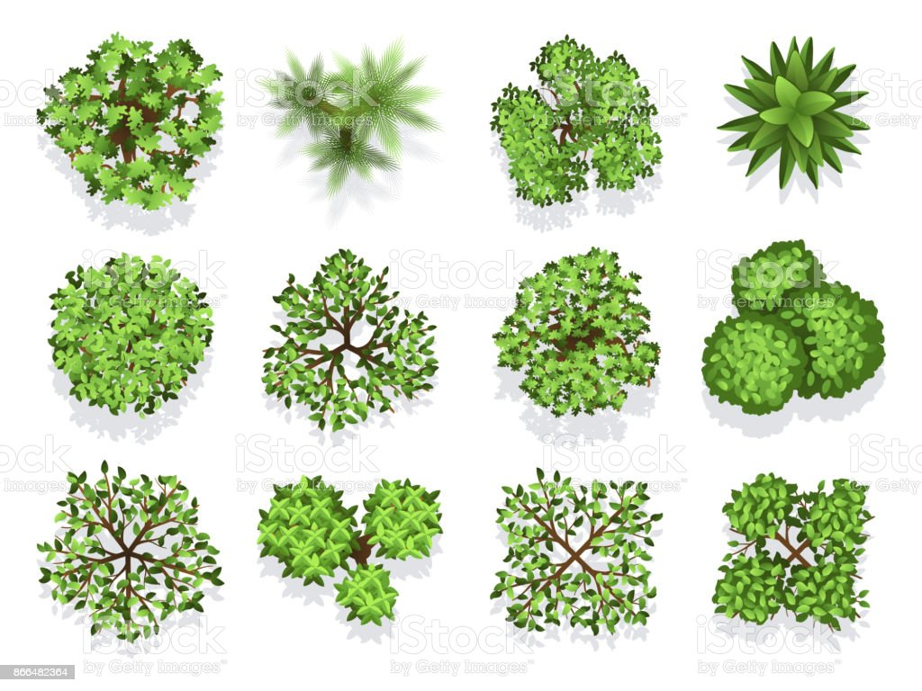 Top view tree collection - green foliage isolated on white background vector art illustration