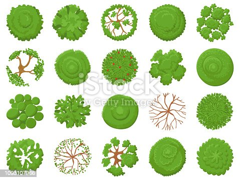 Top view tree. Planting green trees, park map vegetation and tropical forest maps viewing from above. Landscape garden tree planting design vector illustration isolated icons set