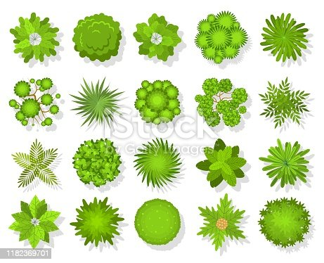 Top view trees and bushes. Aerial landscape elements. Forest and tropical tree, green park bush map icons look from above vector landscaping abstract plans outdoors set