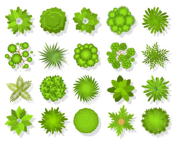 Top view trees and bushes. Aerial landscape elements. Forest and tropical tree, green park bush map icons look from above vector set Top view trees and bushes. Aerial landscape elements. Forest and tropical tree, green park bush map icons look from above vector landscaping abstract plans outdoors set aerial view stock illustrations