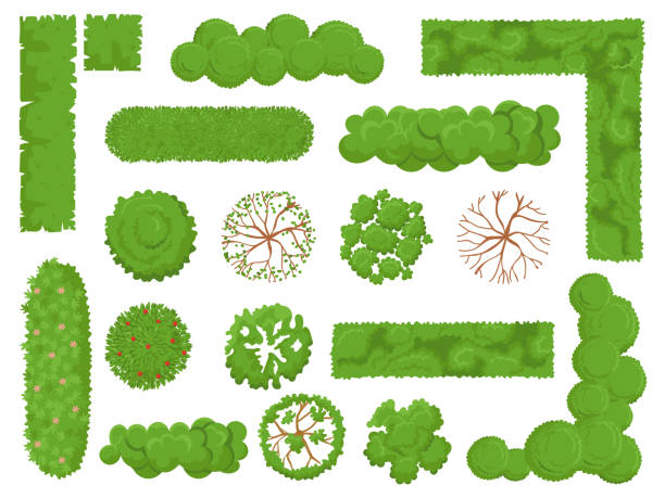 top view trees and bushes. forest tree, green park bush and plant map elements look from above isolated vector set - куст stock illustrations
