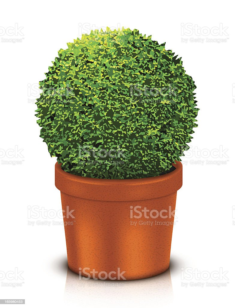 Topiary ball in a brown pot against white background vector art illustration