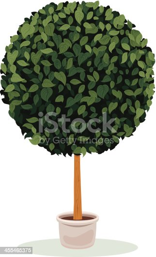 An image of topiary sphere plant
