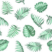 Topical palm leaves pattern.