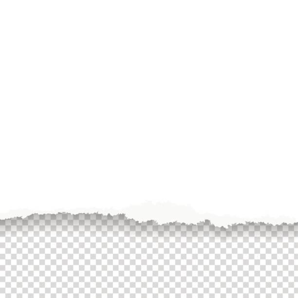 stockillustraties, clipart, cartoons en iconen met gescheurd papier met geripte rand - netherlands map