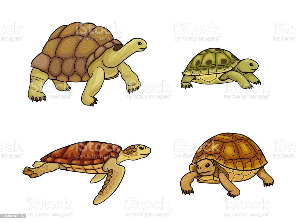 Tortoise and turtle - vector illustration