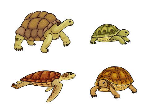 Tortoise and turtle - vector illustration