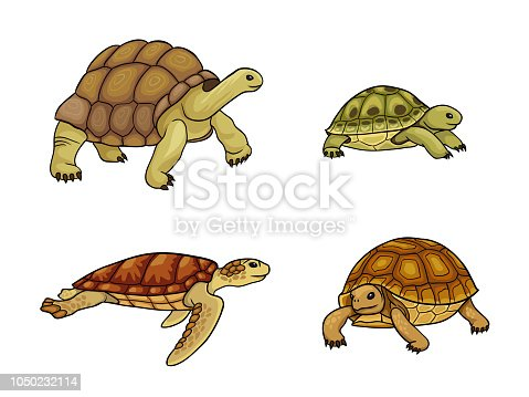 Set of tortoise and turtle - vector illustration. EPS8