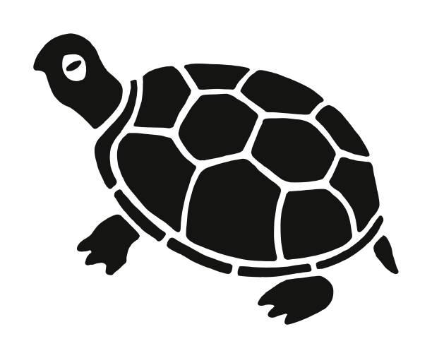 Tortoise Tortoise turtle stock illustrations