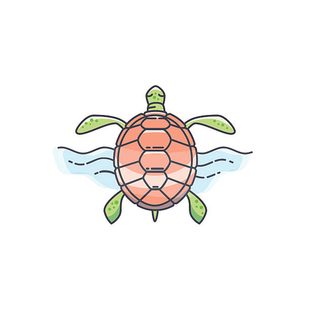 Cute Turtle Tattoo Drawings Illustrations Royalty Free Vector