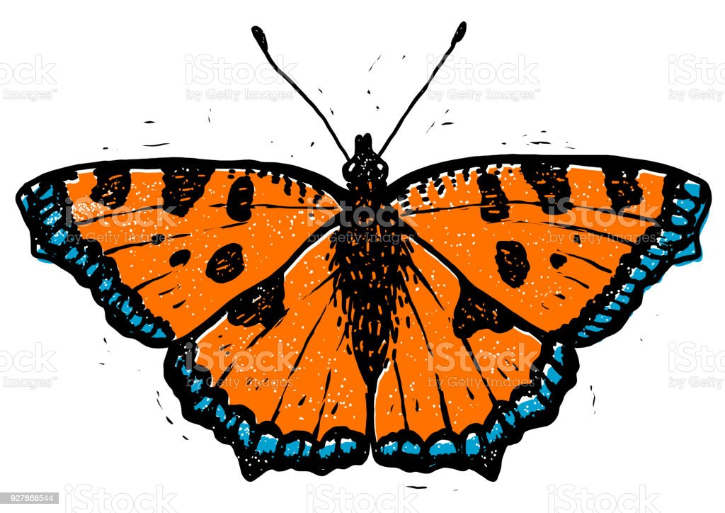 Schildpatt Schmetterling Linolschnitt Illustration Zeichnen Tinte ...