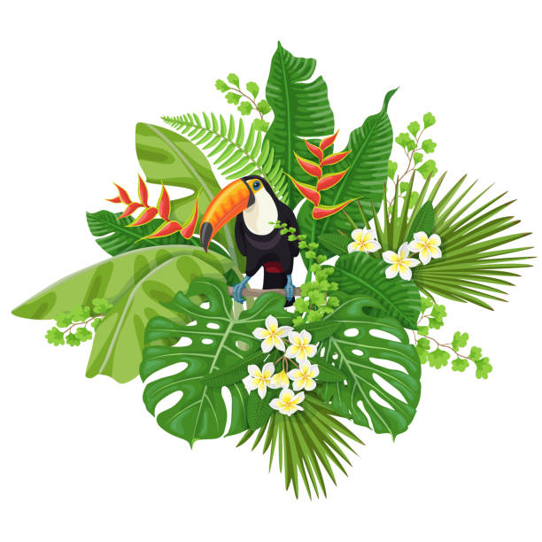 Toucan and Tropical Plants Colorful  floral bunch with green leaves and flowers of tropical plants  and  bird isolated on white.  Toucan sitting on liana branch. Vector flat illustration. amazon stock illustrations