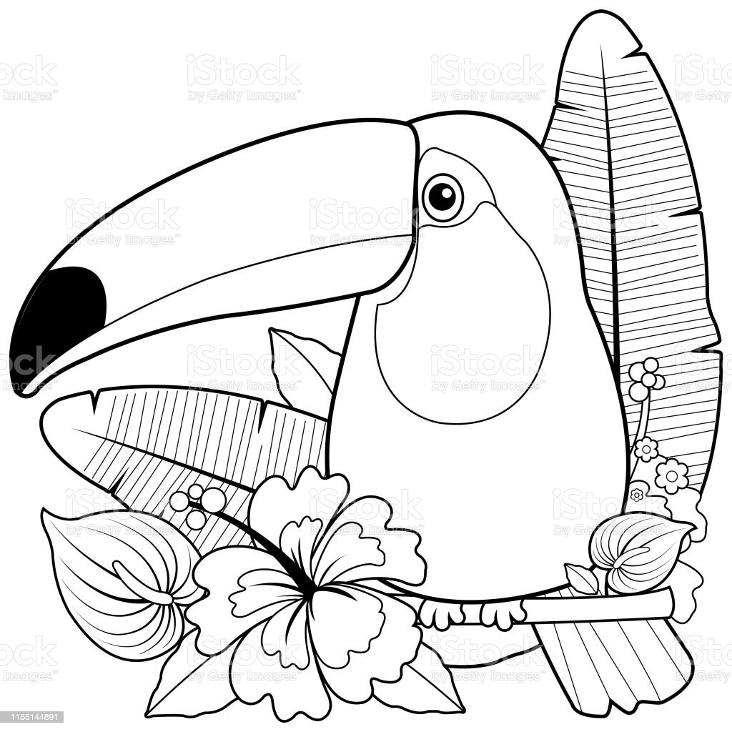 Toucan Coloring Page - Colouring Page Of A Toucan, HD Png Download ... | 1024x1024